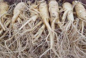 인삼시장 먹거리 - 풍기인삼