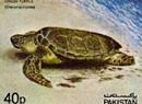모래온도가 바다거북이의 성별 구별한다