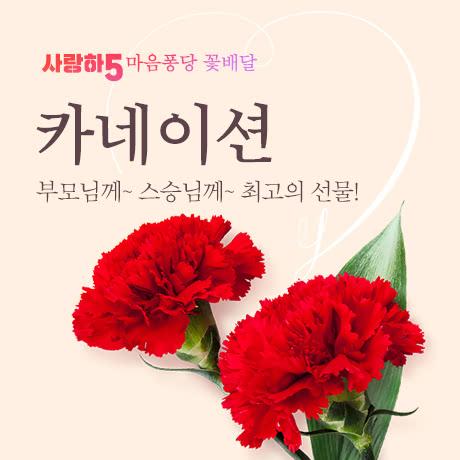사랑하5 꽃배달_카네이션