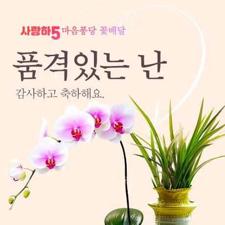 사랑하5 꽃배달_난