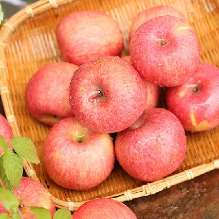 [푸르네청과] 주왕산 청송 꿀 사과(부사) 5kg내외