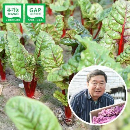 충주 유기농 쌈채소