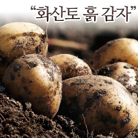 제주 화산토 흙감자(대)