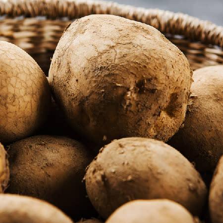 강원도 정선 가리왕산 기슭의 두메산골 분나는 감자(대사이즈 이상)