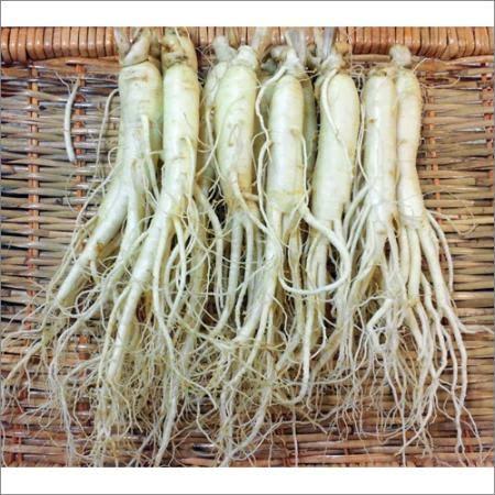금산인삼도매시장 바로먹는 세척수삼 원수삼중 1채 700g