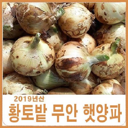 2019년 황토밭 무안햇양파 5kg 생산자 산지배송