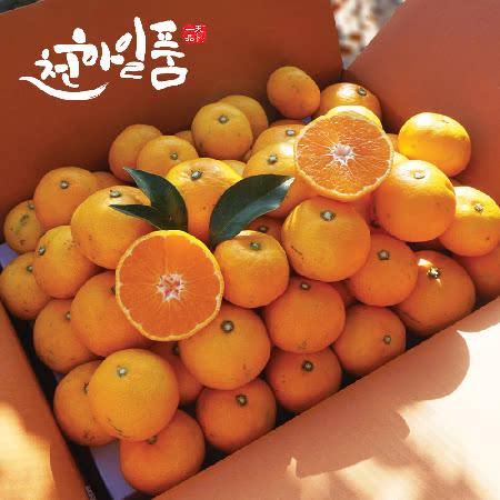 제주 노지 타이벡 조생감귤 7.5kg(실중량) 로얄과(S/M)