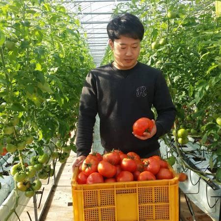 << 대통령 표창 !! >> 따자마자 완숙 토마토 5kg