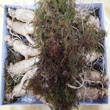풍기인삼 750g 9-10뿌리 종이상자 포장
