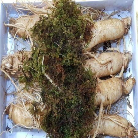 풍기인삼 750g 7-8뿌리 종이상자 포장