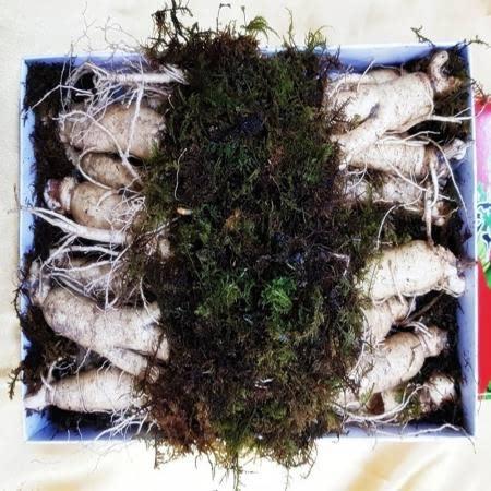 풍기인삼 750g 13-15뿌리 종이상자 포장