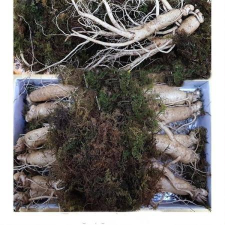 풍기인삼 750g 11-12뿌리 종이상자 포장