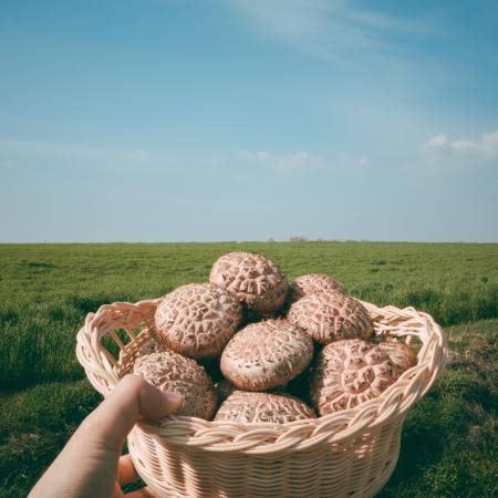[하진이네 버섯뜰에]생표고버섯/건표고버섯