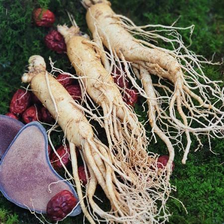 풍기인삼600g(5-6년근)즐겨먹는용도크기