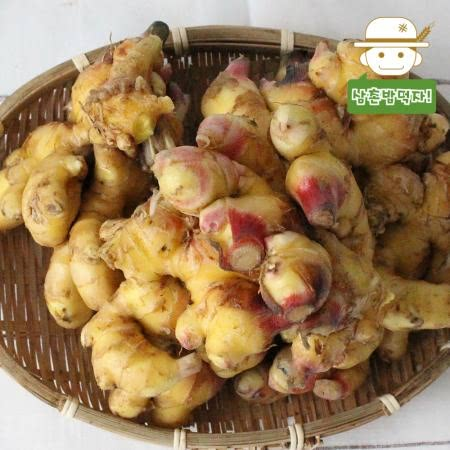 [삼촌밥먹자] 향긋한 영주 햇 생강(특상품) 5kg/10kg