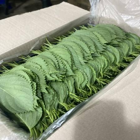 [서천특화시장 ]충남 서천 조선깻잎 2kg 박스
