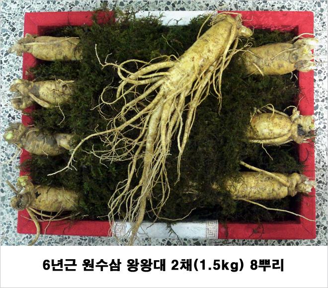 6년근 금산인삼 원수삼 왕왕대 2채 선물세트
